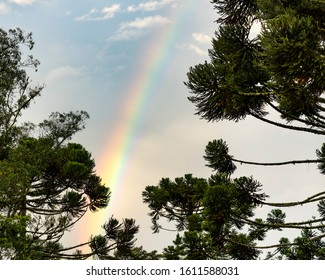 Rainbow and blue sky behind conifers