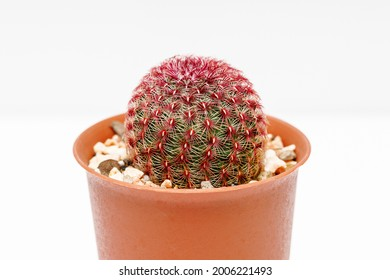 Rainbow Cactus on white background