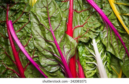 Rainbow Chard Washed and Ready to Prep for Cooking