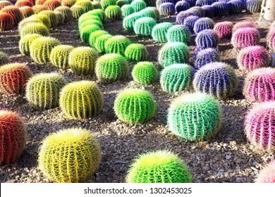 A rainbow colored cactus garden in sunny Mexico.