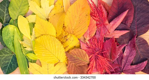 Rainbow of colorful autumnal leaves, panorama