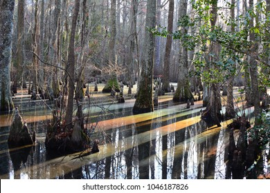 Rainbow colors on the surface of the cypress swamp in First Landing State Park. (Virginia Beach, Virginia)