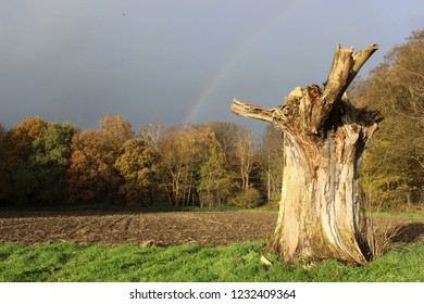 Rainbow with dark sky and tree trunk in the foreground