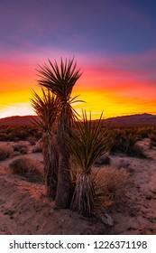 Rainbow Desert Sunset