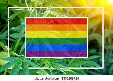 Rainbow flag on the background of the hemp and sunshine. The concept of free love and lgbt community. White frame