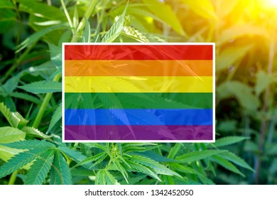 Rainbow flag on the background of the hemp and sunshine. The concept of free love and lgbt community.