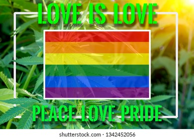 Rainbow flag on the background of the hemp and sunshine. The concept of free love and lgbt community. The inscription love is love, pride, peace