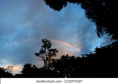rainbow with forest