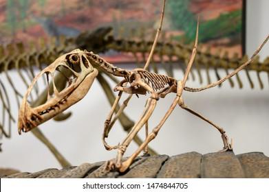 Rainbow Forest Museum, 6618 Petrified Forest Rd, Holbrook, AZ, USA - 4/2019: pterodactyl dinosaur fossil on display