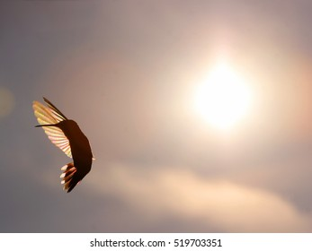 Rainbow Hummer- A lone hummingbird in flight, silhouetted against a setting sun.  The sun shows rainbow like colors in the wings. Plenty of space for text.