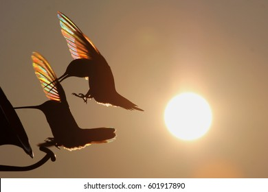 Rainbow Hummers at Feeder - Photograph of two Ruby Throated hummingbirds fighting for a place at a feeding station, with a background of a setting sun which shows rainbow like colors in the wings.