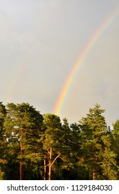 Rainbow on the cloudy sky. Background, summer scene