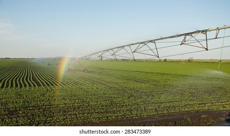Rainbow on the sprinkler system crops