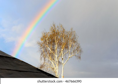 Rainbow over the birch in the background of the piece of the roof of the house. Soft focus.