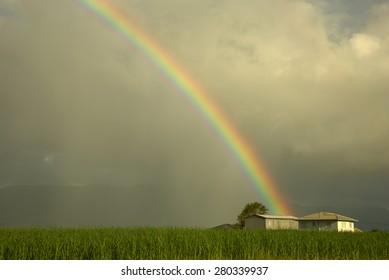 Rainbow over farm house on sugar cane field