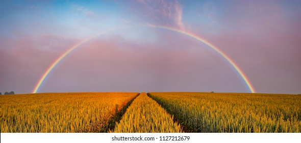 rainbow over the field in the morning