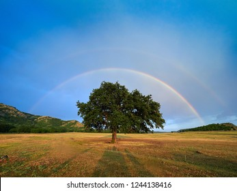 rainbow over the field  in summer