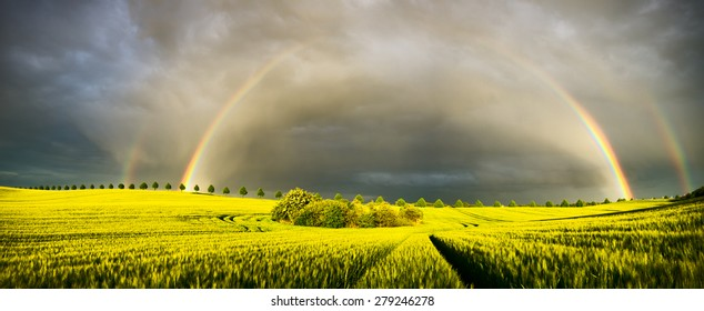 rainbow over a field of young corn