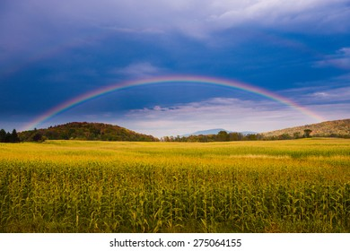 Rainbow over a golden field of corn, Stowe, Vermont, USA.