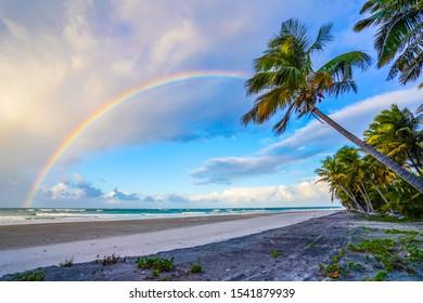Rainbow over the ocean on a beach with palm trees