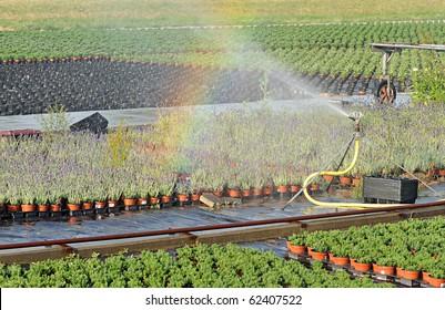 rainbow over a plant nursery (greenery)