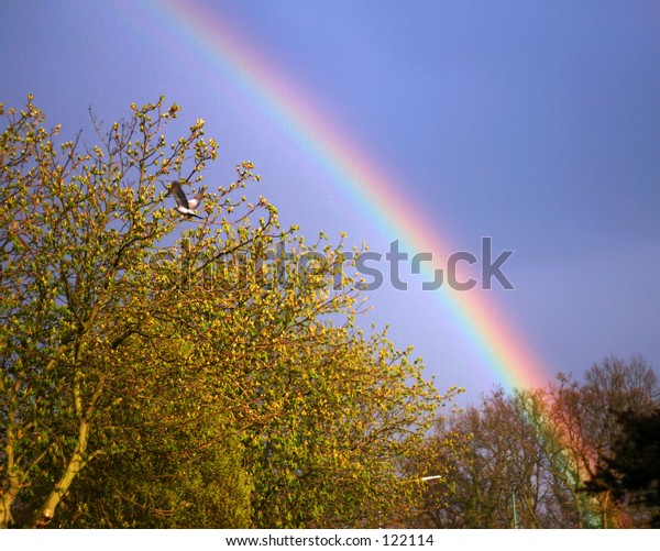 Rainbow over tree
