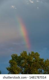 Rainbow over treetop against a stormy sky.