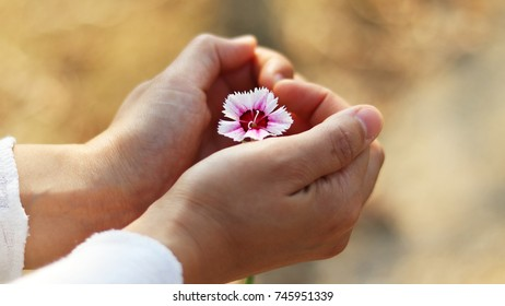 Rainbow pink flower and Heart-shaped hand