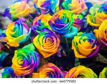 of rainbow rose heart flower and multi colored petals