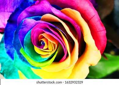 rainbow rose texture as very nice color background