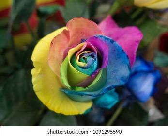 A rainbow roser close up