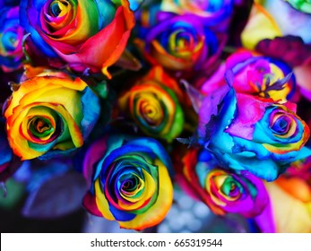 Rainbow roses, the sign of colorful love.