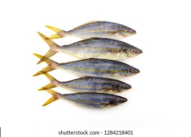 rainbow runner fish isolated on white background.