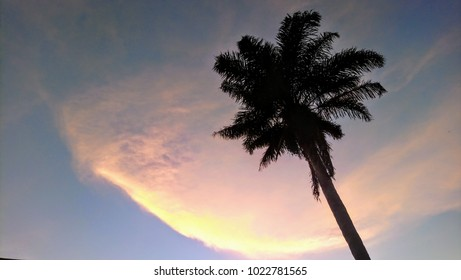Rainbow sky silhouette of a palm tree dreaming big, free, holiday