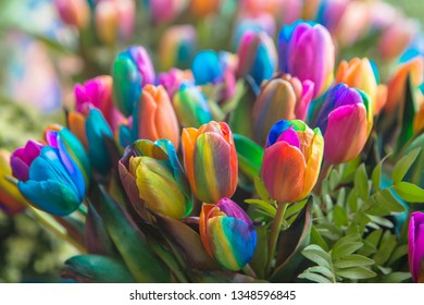 Rainbow spring flowers tulips. Dutch tulip and rainbow symbol of pride. Spring colorful floral background.