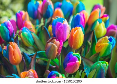 Rainbow spring flowers tulips. Rainbow symbol of fun and pride. Spring colorful floral background.