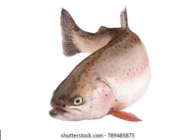 rainbow trout, clipping path, isolated on a white background, full depth of field