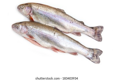 Rainbow trout isolated on a white studio background.