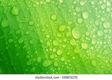 the raindrop on green leaf look freshy