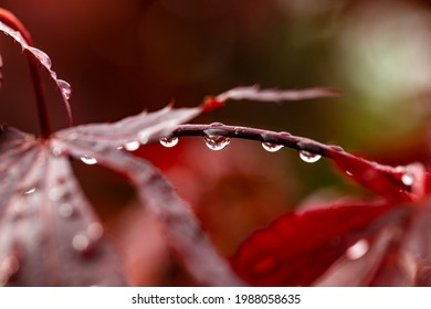 The raindrop turns everything upside down