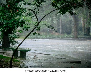 Raindrops, cloudy afternoon in the Ibirapuera Park