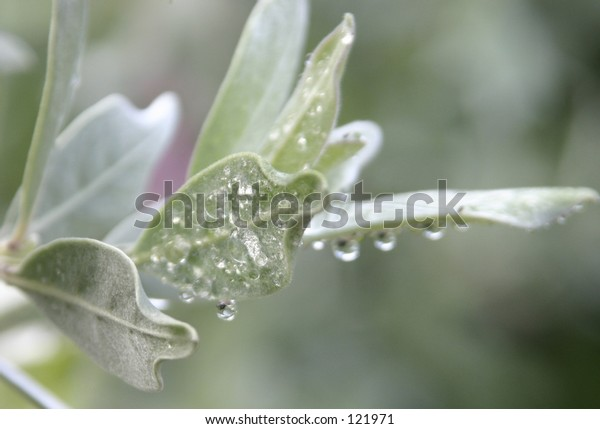 raindrops covering surface of leaf