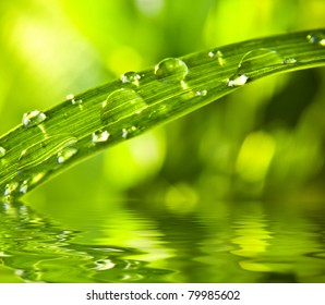 The raindrops lie on green sheet