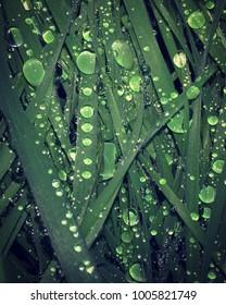 Raindrops on Grass Blades