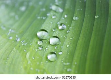 raindrops on a green leaf