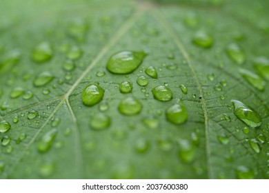 raindrops on green leaves during rainy days