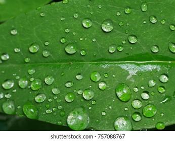 Raindrops on a leaf close up