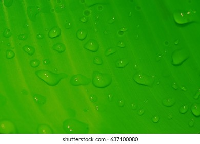 the raindrops on leaf in closeup for backgrounds