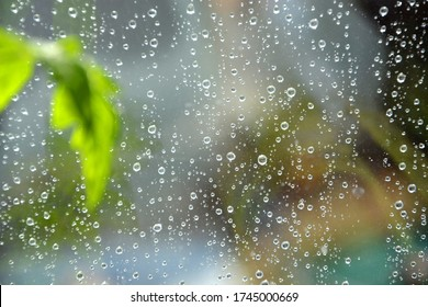 Raindrops on the transparent window pane. Background of raindrops on a wet, gray and opaque glass texture. Outside the window, rainy summer weather. Flowers on the window, blurred foreground.