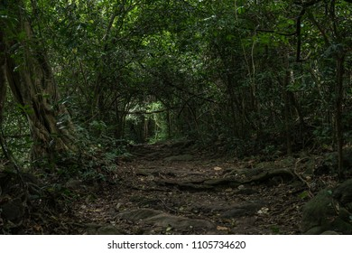 Rainfall on green foliage in the forest